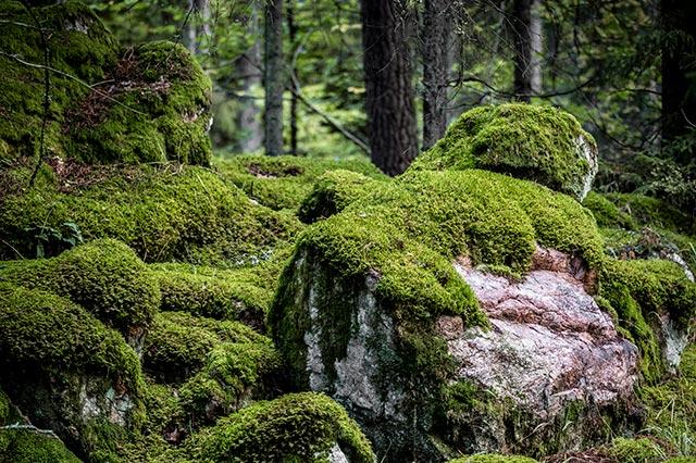 Bild pa skog och sten